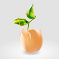 Plant in eggshell vector illustration of a Royalty Free Stock Images