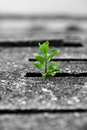 Plant Emerging from Concrete Stock Image