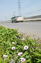 Plant and flower on road side Stock Photo