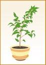 Plant gommifère dans le bac Photographie stock libre de droits
