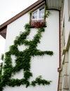 Plant graffiti 1 Royalty Free Stock Photo
