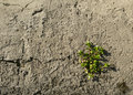 Plant grass on concrete Royalty Free Stock Photo