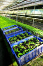 Plant green house flower nursery Stock Images