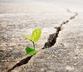 Plant grow on street ecology concept Royalty Free Stock Photography