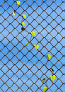 Plant growing on chainlink fence the Royalty Free Stock Photography