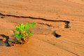 Plant growing in a desert sand wet Stock Photos
