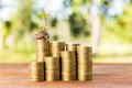 Plant growing out of coins Royalty Free Stock Photo