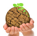 Plant growing out of parched planet in hands Royalty Free Stock Photo
