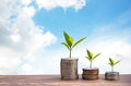 Plant Growing In Savings Coins. Money coin stack growing graph. blue sky background. Royalty Free Stock Photo