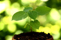 Plant growing in a small pot Royalty Free Stock Photo