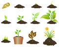 Plant growing stages of a illustration Stock Photos
