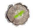Plant growing on tree stump isolate on white background Stock Images