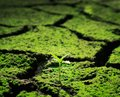 Plant growing trough soil green dead Royalty Free Stock Image