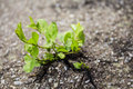 Plant grown from the asphalt road Royalty Free Stock Photo