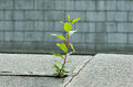 Plant grown in stone slabs Stock Photo