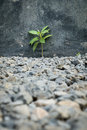 Plant grows on gravel difficult environment and condition Stock Photo