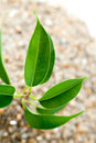 Plant grows from sand young Royalty Free Stock Photos