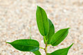 Plant grows from sand young Stock Image