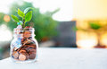 Plant grows up in money Royalty Free Stock Photo