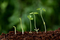 Plant growth new beginnings against green Stock Images