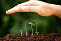 Plant growth new beginnings hand protecting young plants growing from soil Royalty Free Stock Image