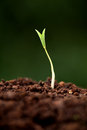 Plant growth new beginnings life Stock Image