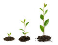 Plant growth Royalty Free Stock Photo