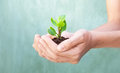 stock image of  Plant in hands grows up, earth