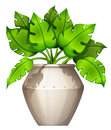 A plant with a heart-shaped leaves