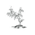 Plant With Leaves Engraving. D...