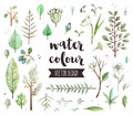 Plant leaves watercolor vector objects premium quality icons set of various wild trees branch hand drawn realistic decoration with Royalty Free Stock Photos