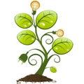 Plant with light bulbs and plug