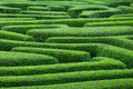 Plant maze from top view Royalty Free Stock Photos