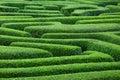 Plant maze Royalty Free Stock Photo