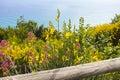 Plant mediterranean near riomaggiore in la spezia Stock Photos