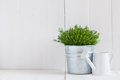 Plant in a metal pot and watering can