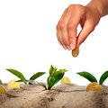 Plant and money in sand Stock Images