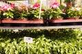 Plant nursery flowers planters mauerpark sunday flea market berlin germany Stock Photos