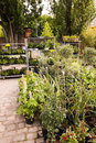 Plant nursery mauerpark sunday flea market berlin germany Royalty Free Stock Images