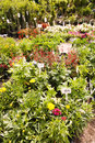 Plant nursery mauerpark sunday flea market berlin germany Stock Image