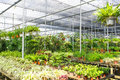 Plant nursery row of ornamental tropical in Royalty Free Stock Images