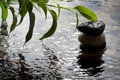 Plant and pebbles with waterdrop and ripples Royalty Free Stock Photos