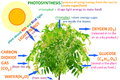 Plant photosynthesis concept