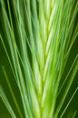 Plant portrait wall barley hordeum murinum spikelet on rough ground Stock Image
