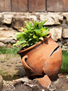 Plant in pot outdoor sunlight Royalty Free Stock Images