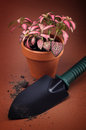 Plant pot and trowel Royalty Free Stock Images