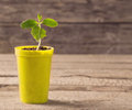 Plant in pot on wooden background young Stock Images