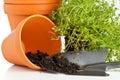 Plant pots Royalty Free Stock Photo