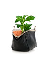 Plant and purse isolated over white Royalty Free Stock Photo