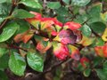 Plant with raindrops on it colorful rain Royalty Free Stock Photography